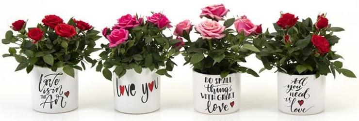 Rose a San Valentino!